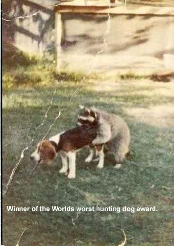 Nejhorší lovecký pes